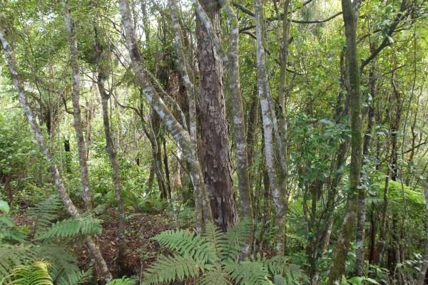 Natural Native Bush